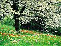 Spring Flourish Free Screensaver: View larger screenshot