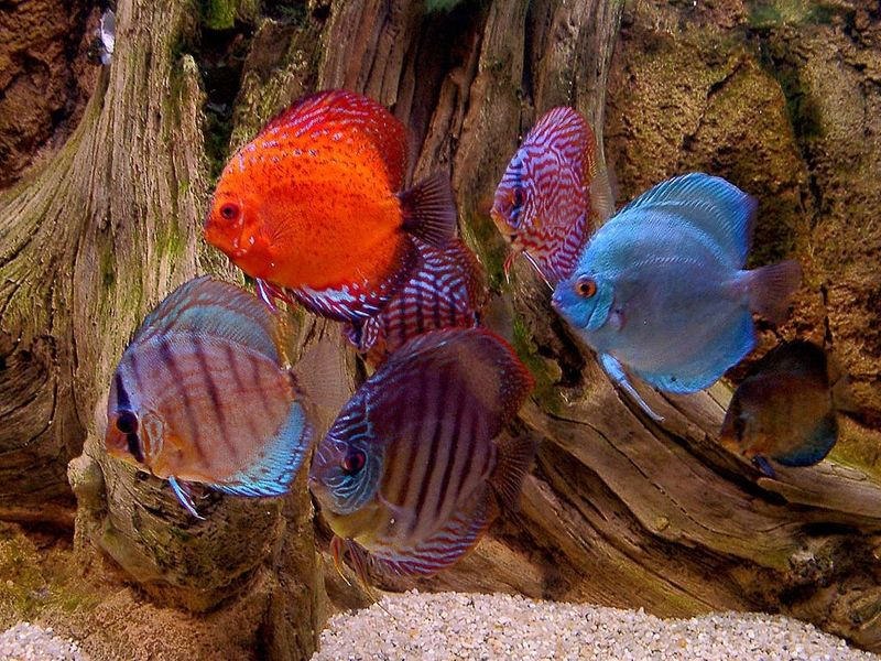See aquarium fishes on desktop.