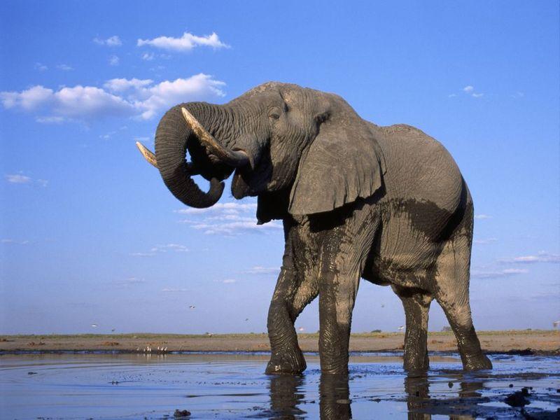 Elephants Free Screensaver 2.0.2