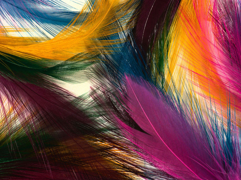 Nice Feathers Free Screensaver 2.0.1