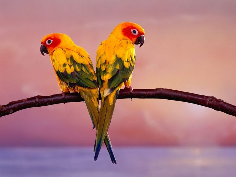 Click to view Parrots Free Screensaver 2.0 screenshot